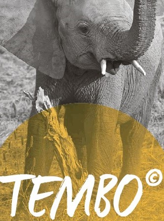 Foto: kleiner Elefant Tembo
